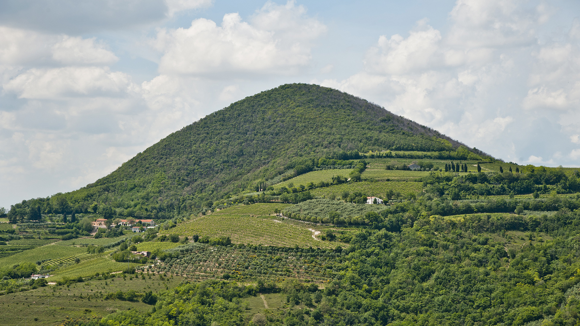 spinefrasse-vino-colli-euganei-cantina-slider2