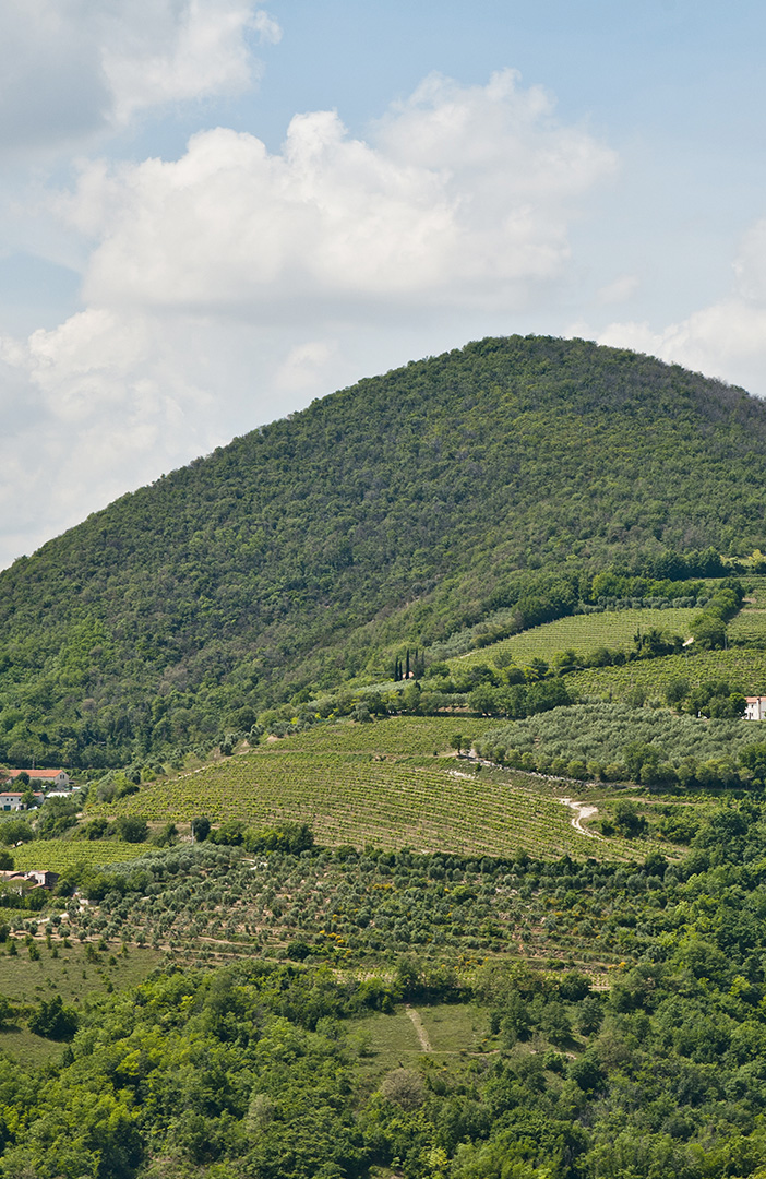 spinefrasse-vino-colli-euganei-cantina-slider2-mobile