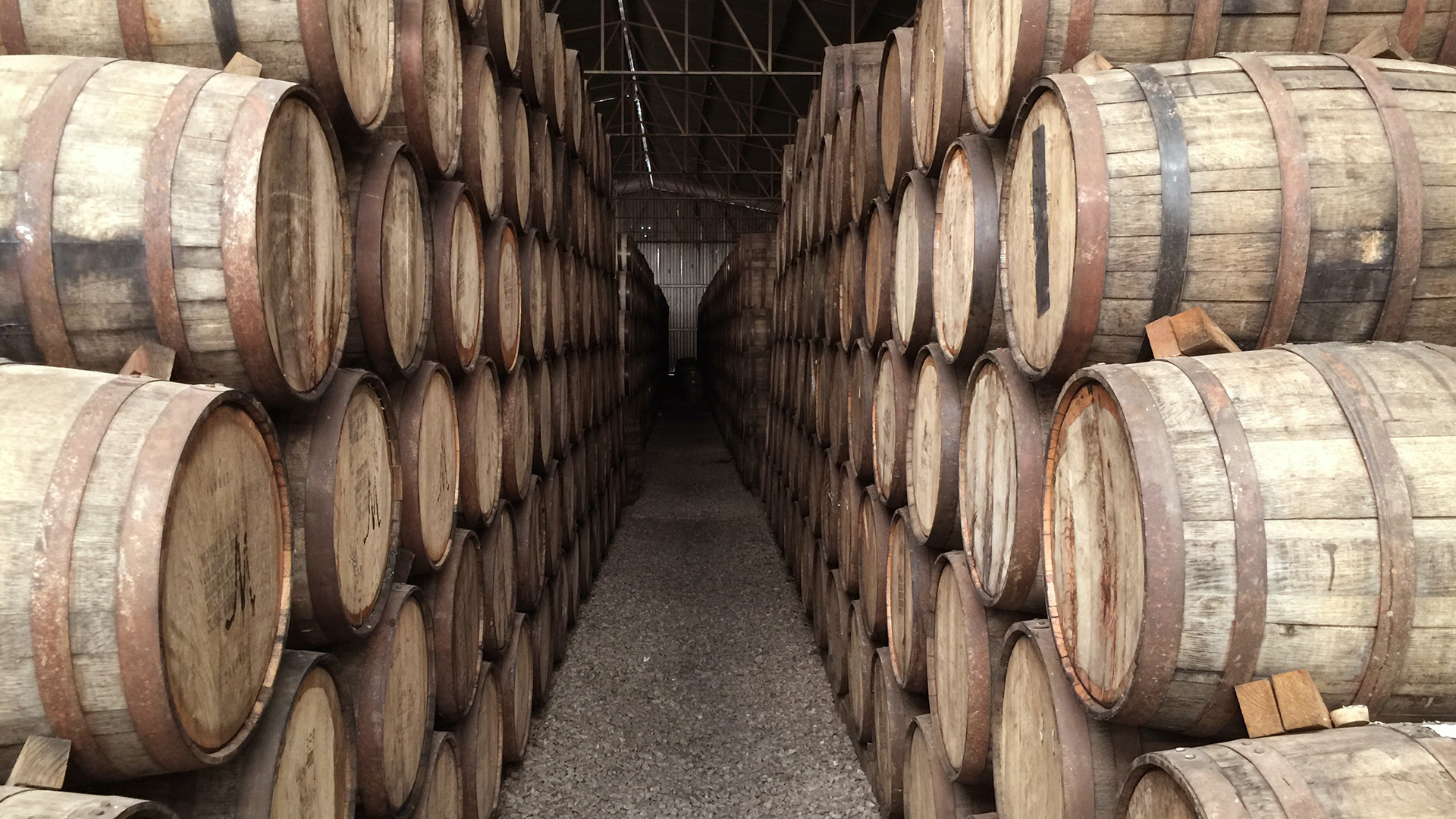 spinefrasse-vino-colli-euganei-cantina-slider3