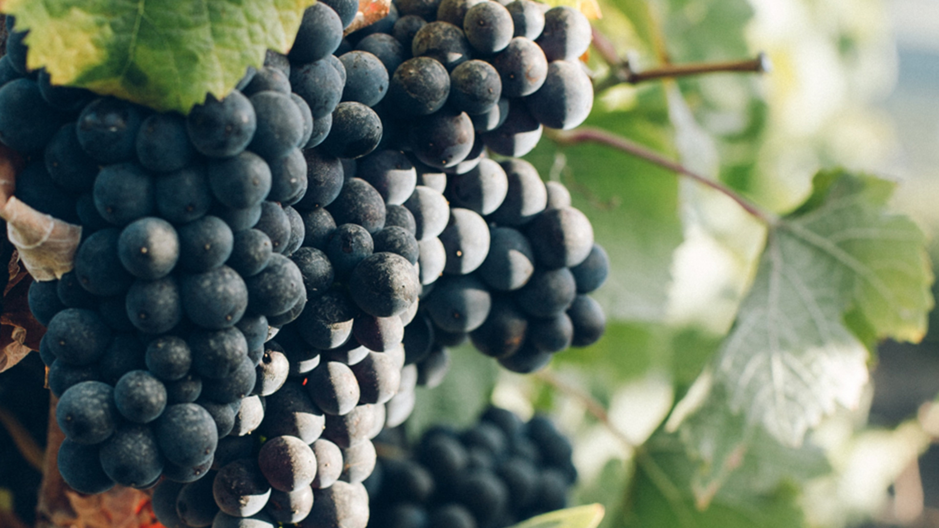 spinefrasse-vino-colli-euganei-cantina-slider4