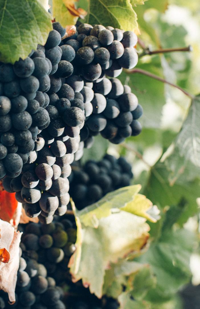 spinefrasse-vino-colli-euganei-cantina-slider4-mobile